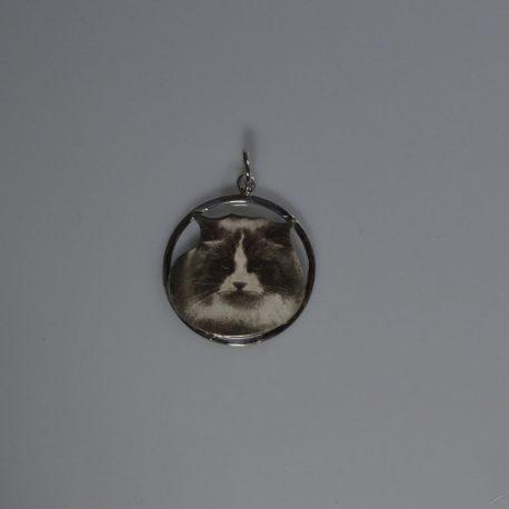 cio gatto fotoincisione ragdoll testa